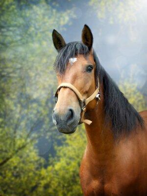 Наклейка Браун лошадь в весенний пейзаж