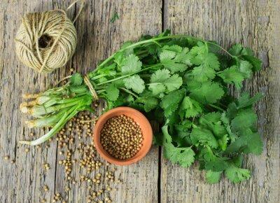 Наклейка Букет свежей кинзой и семена кориандра