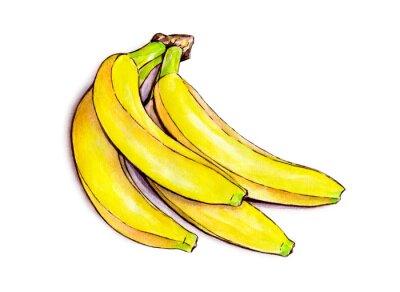 Наклейка Гроздь бананов, изолированных на белом фоне. Акварель иллюстрации. Тропические фрукты