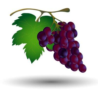 Наклейка Гроздь винограда с листом на белом фоне