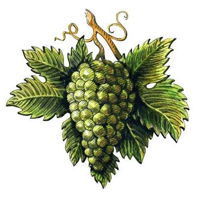 Наклейка Куча спелых зеленого винограда, акварель иллюстрации, ручной обращается