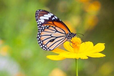 Наклейка Бабочки и цветы