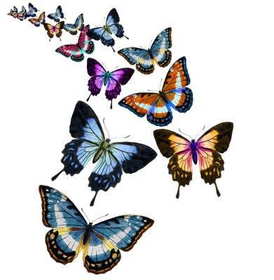 Наклейка Бабочка