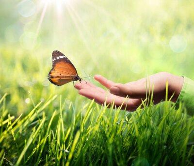 Наклейка Бабочка в руке на траве