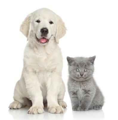 Наклейка Кошка и собака вместе