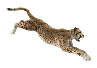 Наклейка Гепард