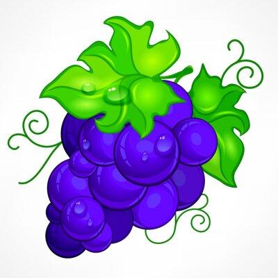 Наклейка Кластер синий виноград с зеленым листом и капли воды на белом фоне,