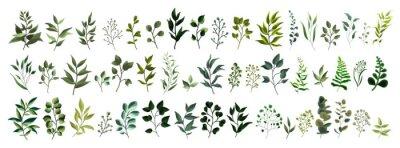 Наклейка Сбор зелени листьев растений лесных трав тропических листьев