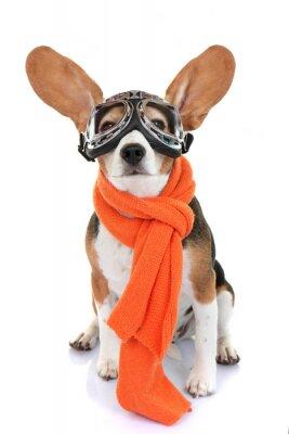 Наклейка Концепция для путешествий или отдыха животных летчика
