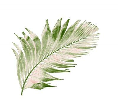 Наклейка Концепция лето с зеленым пальмовых листьев из тропических. Вьющиеся цветочные листья ветви дерева, изолированных на белом фоне картины. плоская планировка, вид сверху.