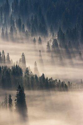 Наклейка хвойный лес в туманных горах