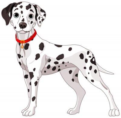 Наклейка Симпатичные собака далматин