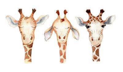 Наклейка Cute giraffe cartoon watercolor illustration animal set