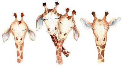 Наклейка Cute giraffes couple cartoon watercolor illustration animal set