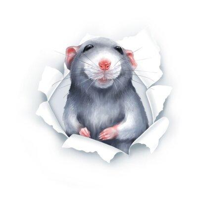 Наклейка Cute gray cartoon rat, paper breakthrough, digital painting