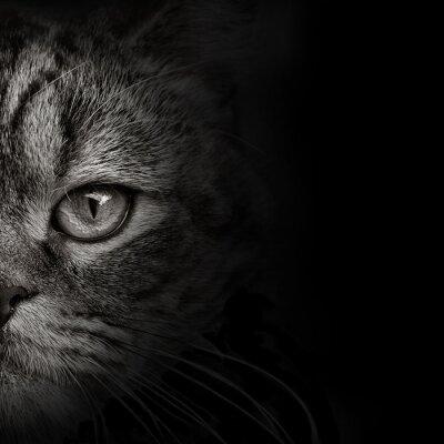 Наклейка темная морда кошки крупным планом. передний план