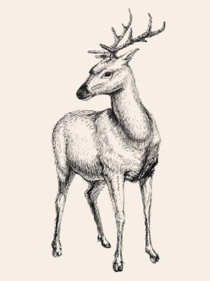 Наклейка Олень векторные иллюстрации, ручной обращается, эскиз