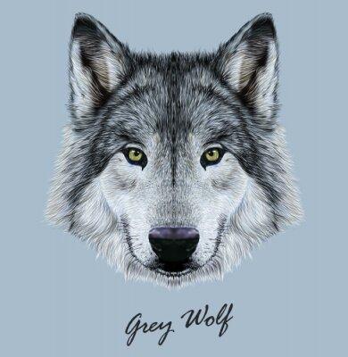 Наклейка Цифровые векторные иллюстрации Портрет волка.