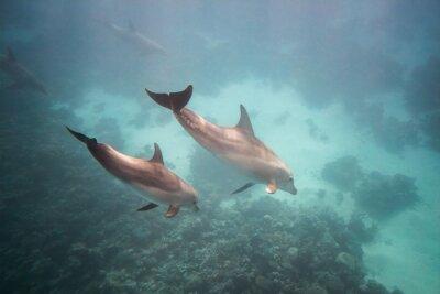 Наклейка Dolphin under water