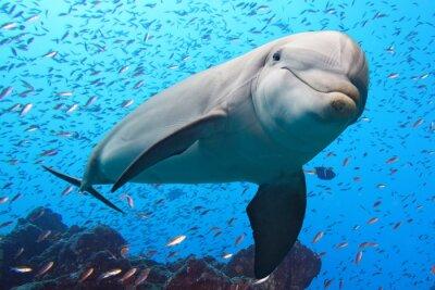 Наклейка дельфин под водой на фоне рифа