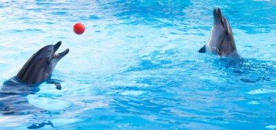 Наклейка Дельфины играют шары