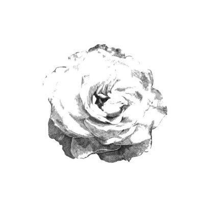 Наклейка обращается розы
