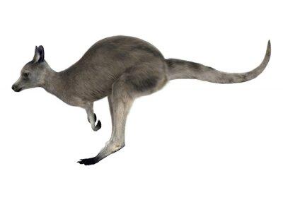 Наклейка Гигантский кенгуру