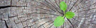 Наклейка Экологическая концепция. Восходящий росток подорожника старого дерева и символизирует борьбу за новую жизнь, панорамный баннер с рамкой.