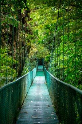 Наклейка Brücke им сделайте Regenwald