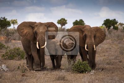 Наклейка слон