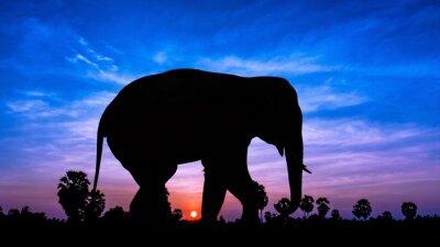 Наклейка Слон andpPalm дерево на сумеречного времени
