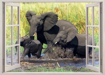 Наклейка Слоны