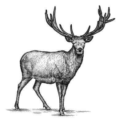 Наклейка выгравировать оленей иллюстрации