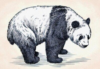 Наклейка выгравировать чернила ничья панда иллюстрации