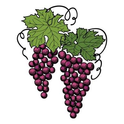 Наклейка гравирования виноград на ветке на белом фоне