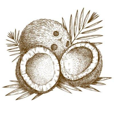 Наклейка гравировка иллюстрация кокосового и пальмового листа