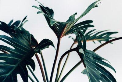 Наклейка Экзотические тропические листья ксанаду на белом background.nature концепциях