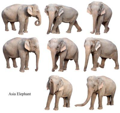 Наклейка женщина Азии слон изолирован