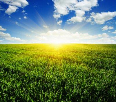 Наклейка поле и солнце