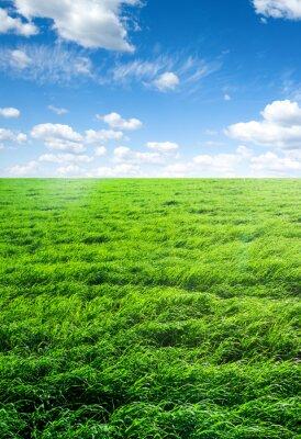 Наклейка поле травы и совершенный небо