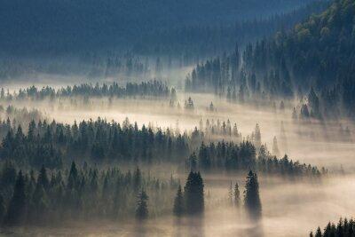 Наклейка ели на лугу вниз волю к хвойном лесу в туманных горах