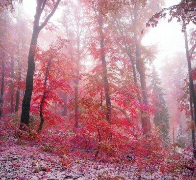 Наклейка Первый снег осенью