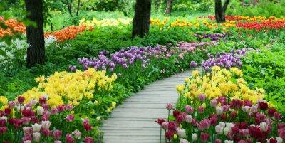 Наклейка Цветущие тюльпаны в саду