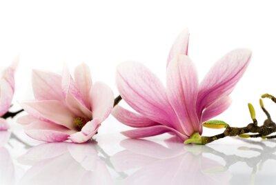 Наклейка цветы