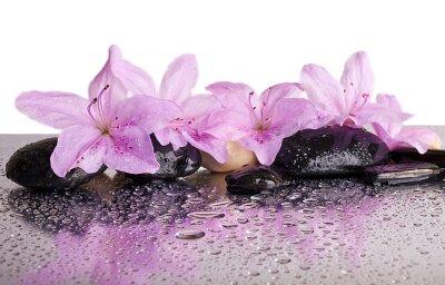 Наклейка цветы и черные камни с отражением