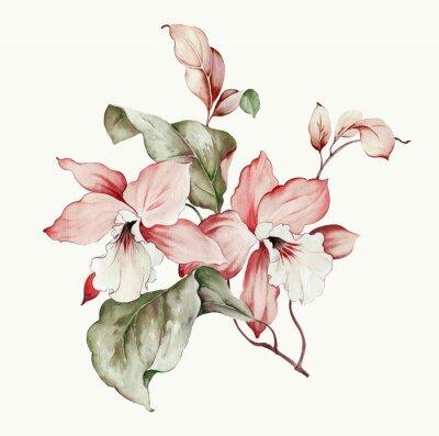 Наклейка Flowers watercolor illustration.Manual composition.Big Set watercolor elements.