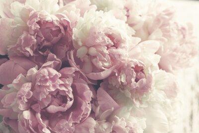 Наклейка Пушистые розовые пионы цветы фон