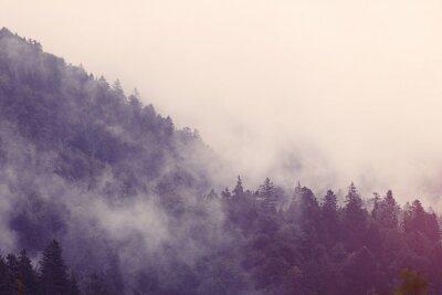 Наклейка Туман в лесу