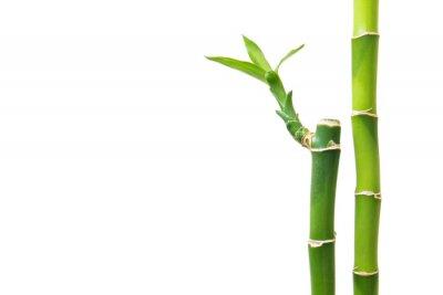 Наклейка Свежий бамбука на белом фоне