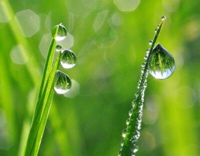 Наклейка Свежая трава с каплями росы закрыть